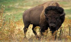 Grassland Animals List, Facts, Adaptations, Pictures