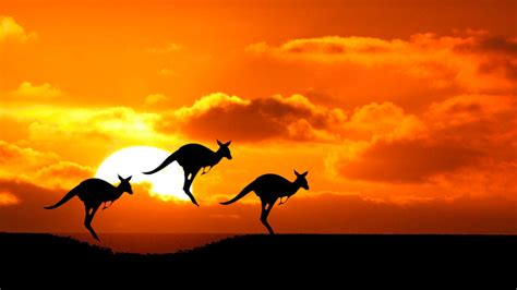 50 Curiosities about Australia that will surprise you