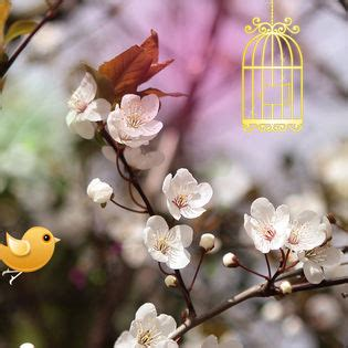 Welcome Spring Twitter Birds Facebook Cover - Nature