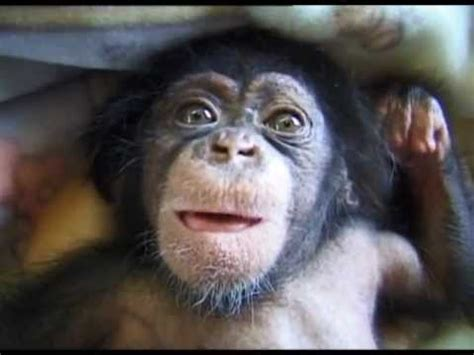 Cute and funny baby of chimpanzee - YouTube