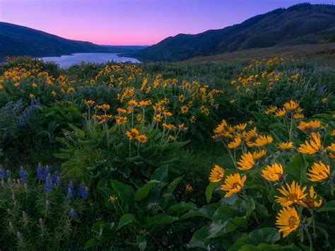 Columbia River And North America Sunset Spring Yellow And
