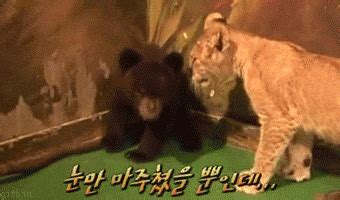 18 Very Funny Animals Freaking Out Gifs - Dose of Funny