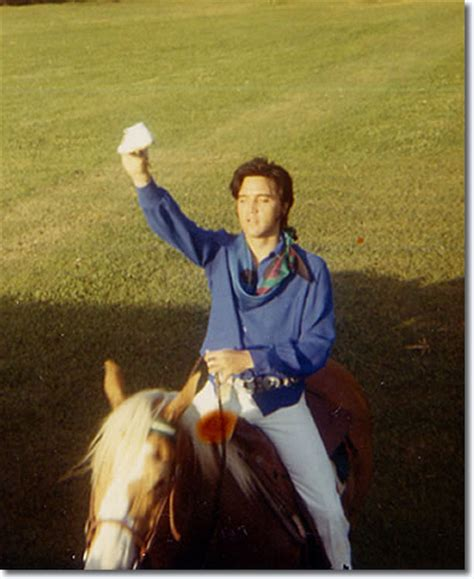 Elvis Presley : Rising Sun and other Horses at Graceland