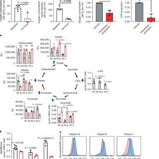 Venetoclax with azacitidine disrupts energy metabolism and