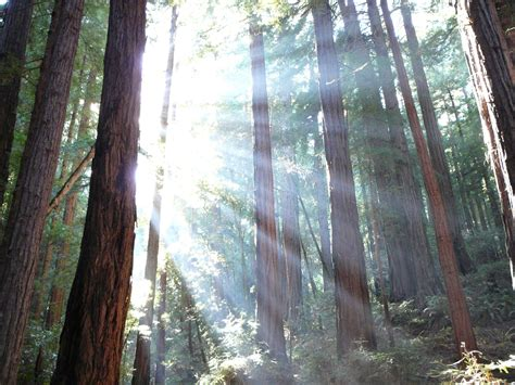 Muir Woods National Monument - Wikipedia